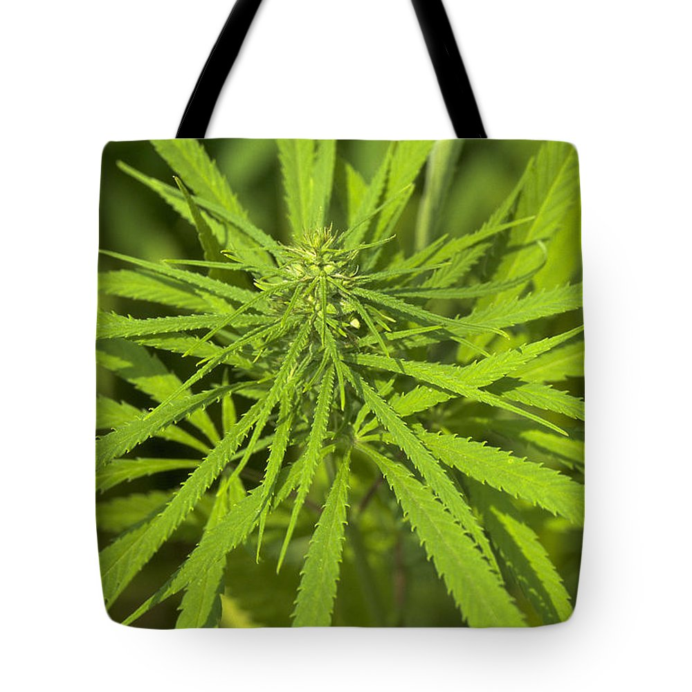 Marihuana Tote Bag featuring the photograph Marihuana by Michael Mogensen