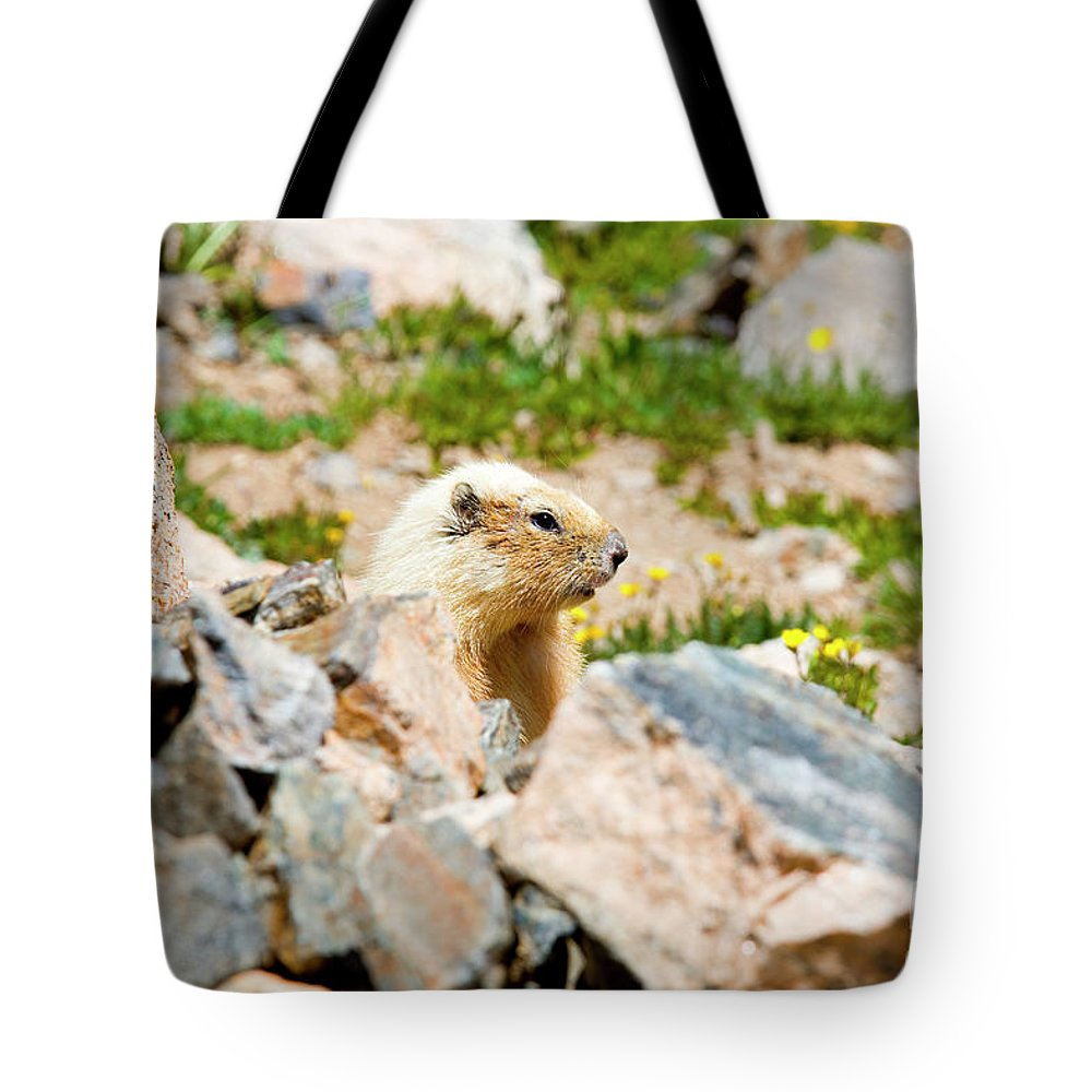 Marmot Tote Bag featuring the photograph Marmot On Mount Massive Colorado by Steve Krull