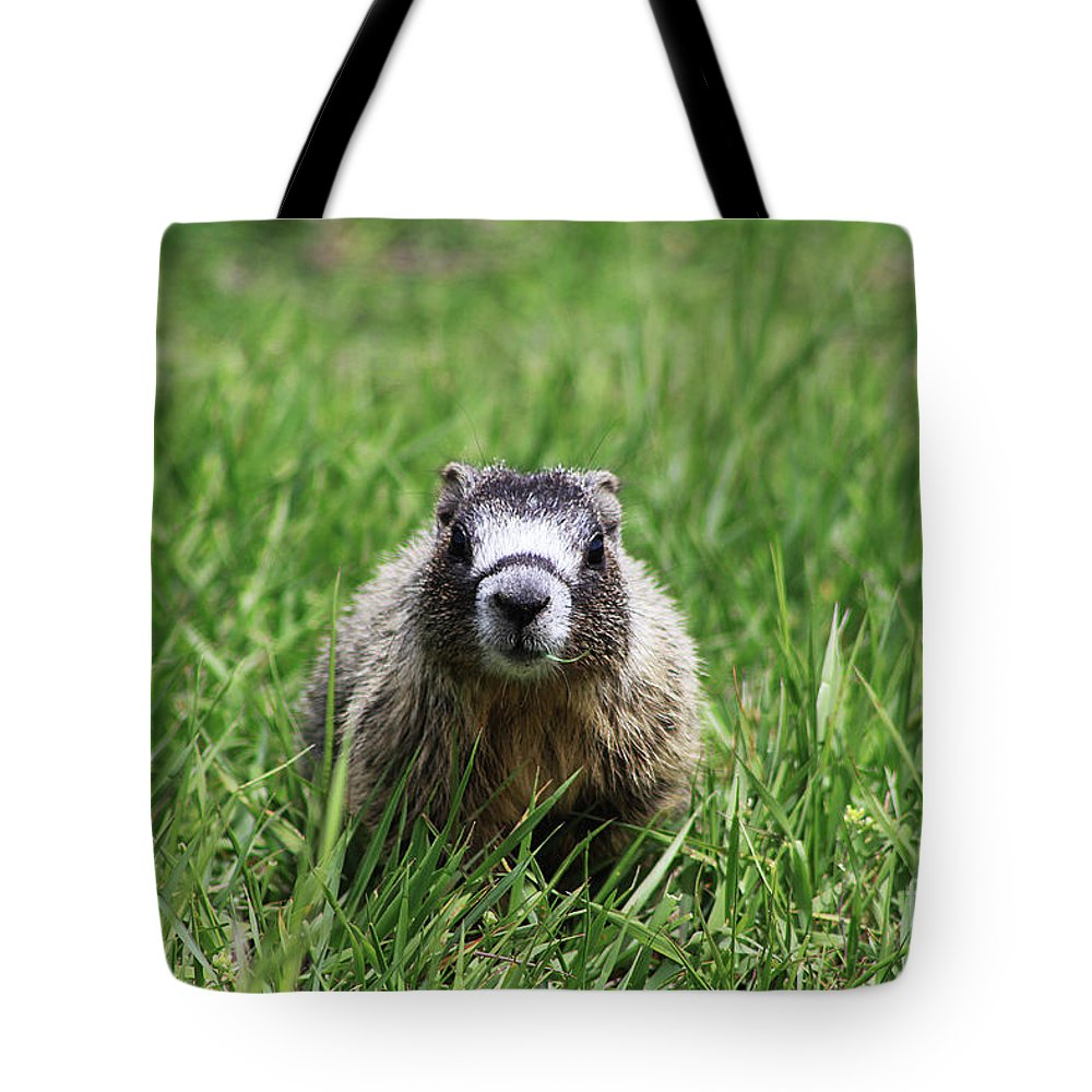 Pup Tote Bag featuring the photograph Marmot Pup by Alyce Taylor