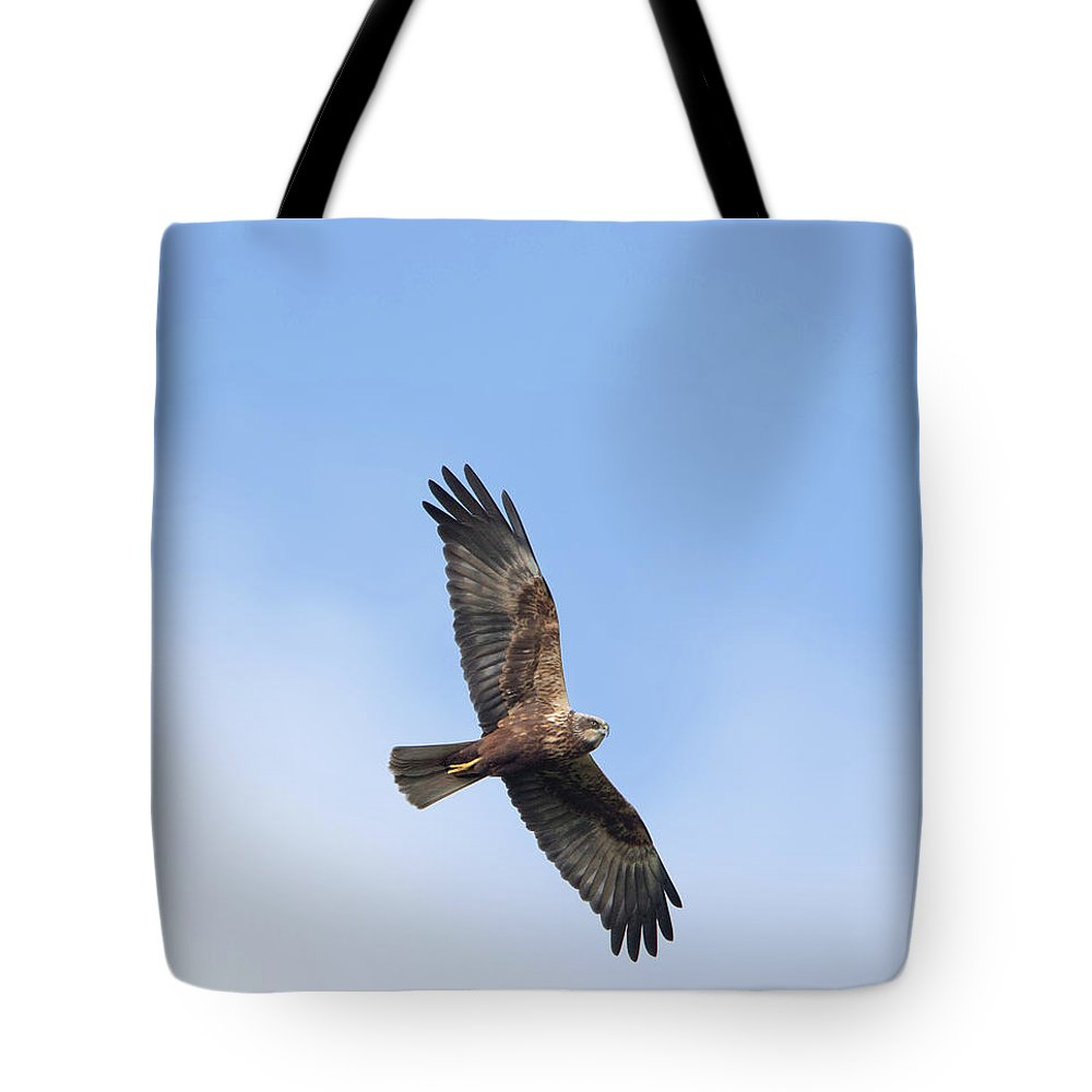Marsh Tote Bag featuring the photograph Marsh Harrier by Peter Walkden