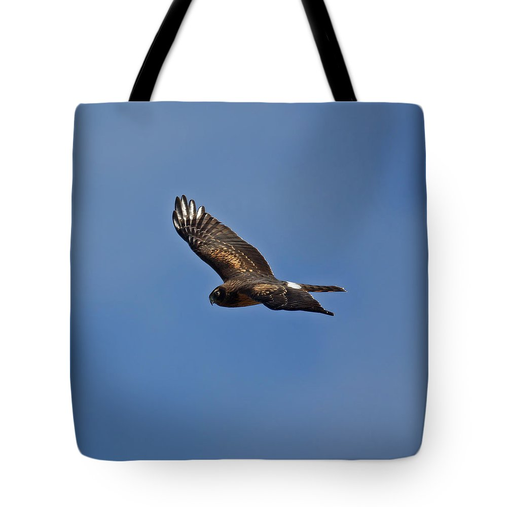 Marsh Hawk Tote Bag featuring the photograph Marsh Hawk Square Format by Ernie Echols