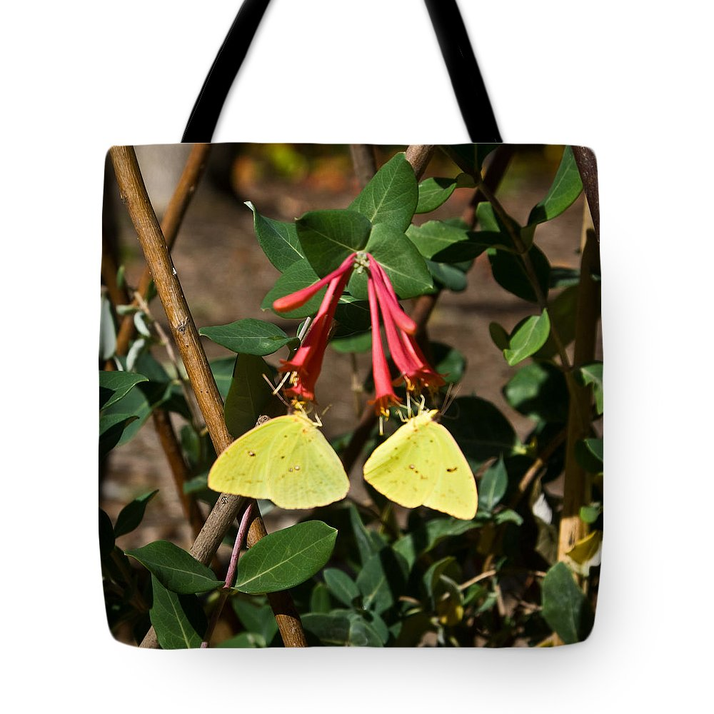Sulfur Tote Bag featuring the photograph Matched Pair Of Sulfur Butterflies by Douglas Barnett