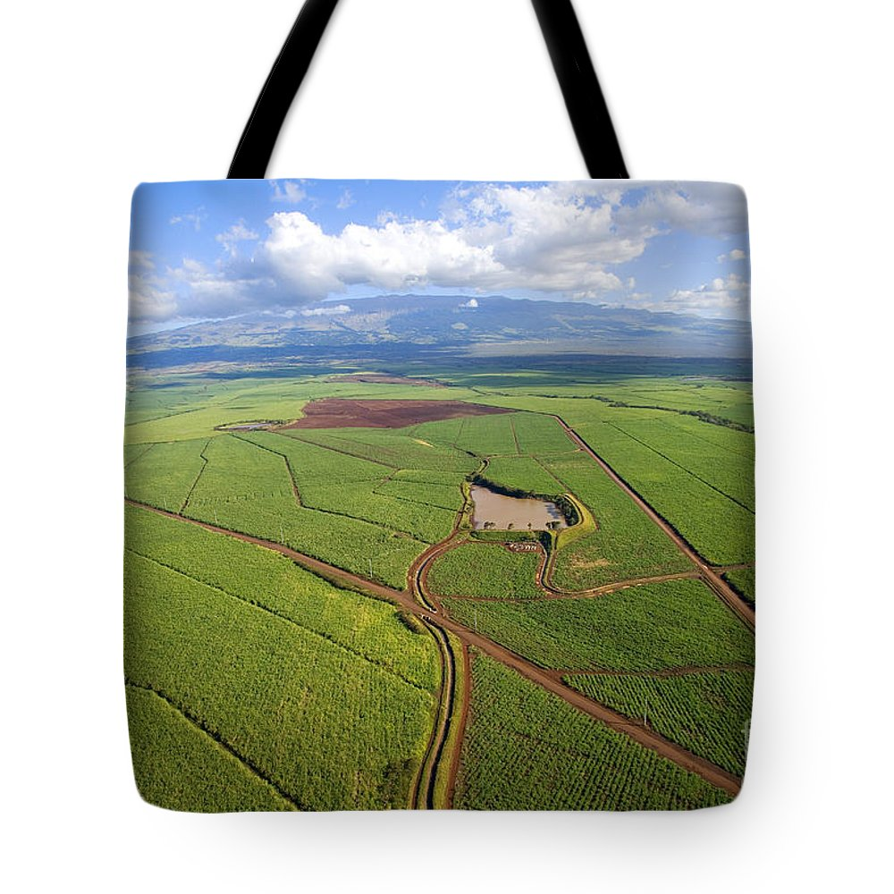 Above Tote Bag featuring the photograph Maui Sugar Cane by Ron Dahlquist - Printscapes