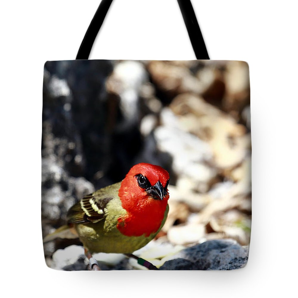 Bird Tote Bag featuring the photograph Mauritius Fody by Marek Rutkowski