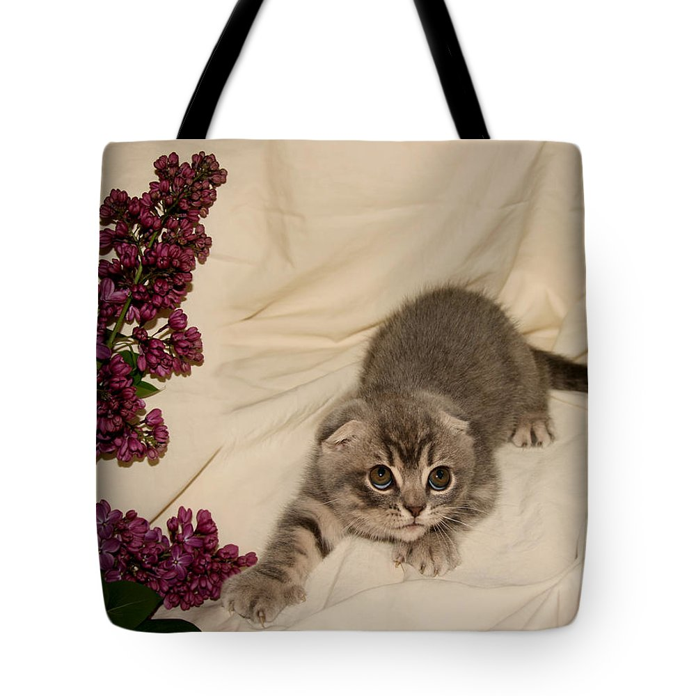 Cat Tote Bag featuring the pyrography May 2010 by Robert Morin