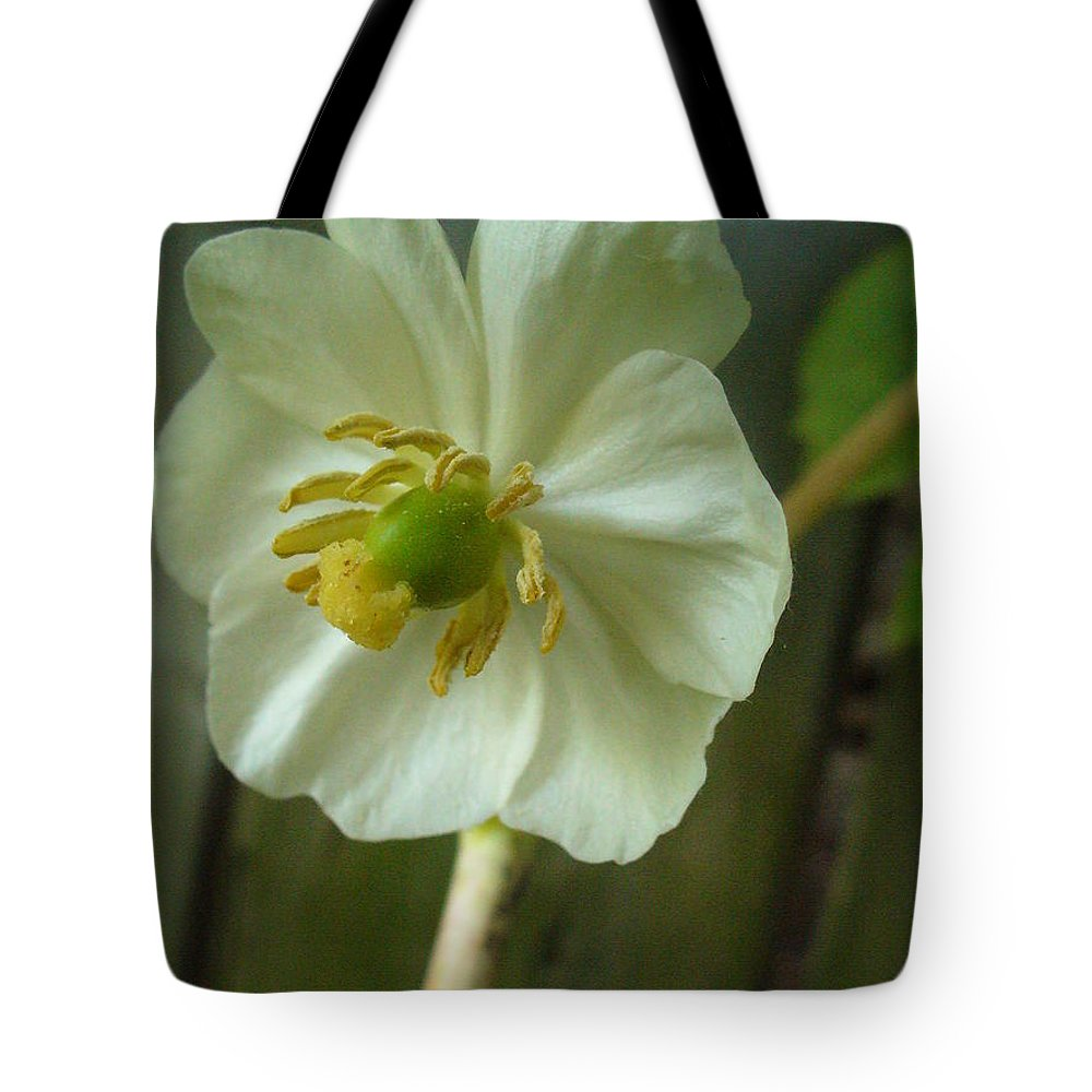 May Apple Tote Bag featuring the photograph May Apple Blossom by Peggy King