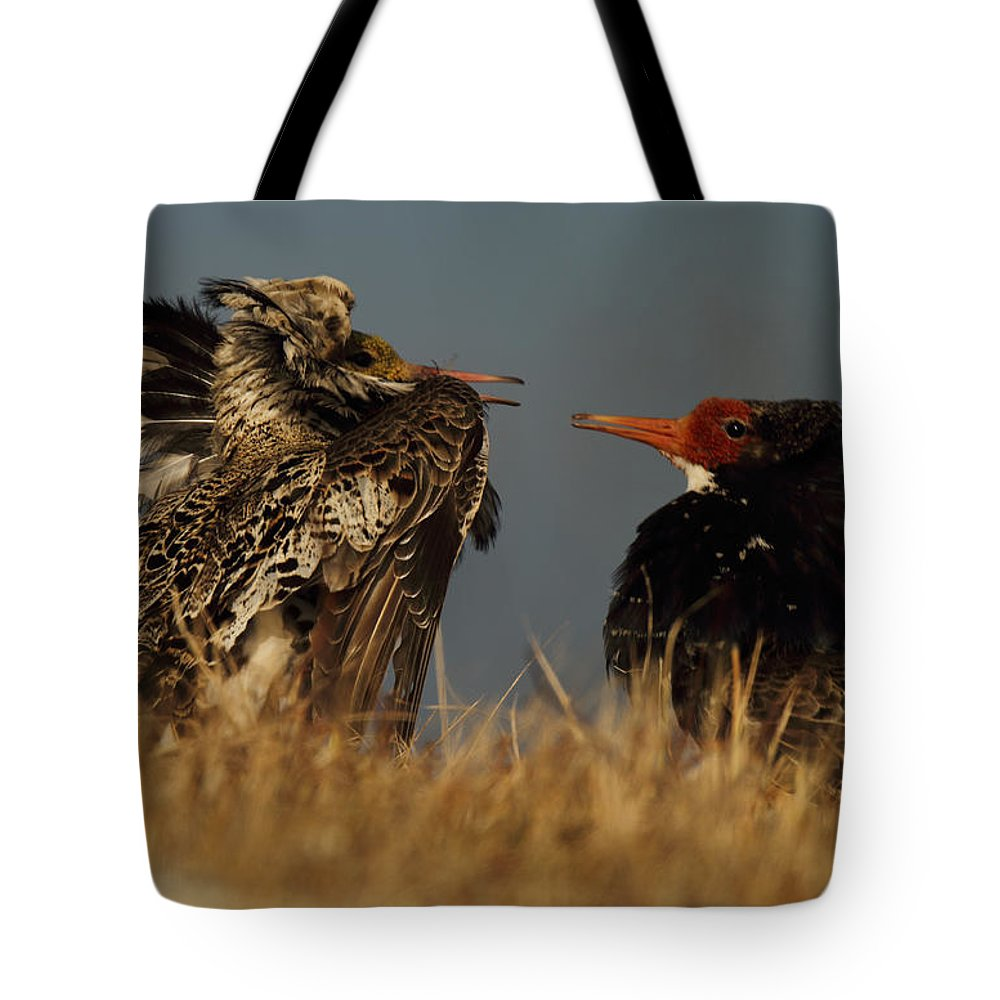 Ruff Tote Bag featuring the photograph Measuring The Opponent by Pekka Sammallahti