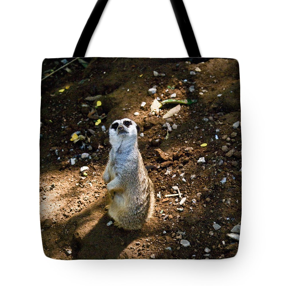 Meerkat Tote Bag featuring the photograph Meerkat   Say What by Douglas Barnett