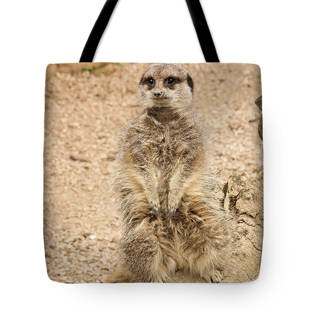 Meerkat Tote Bag featuring the photograph Meerkat by Chris Boulton