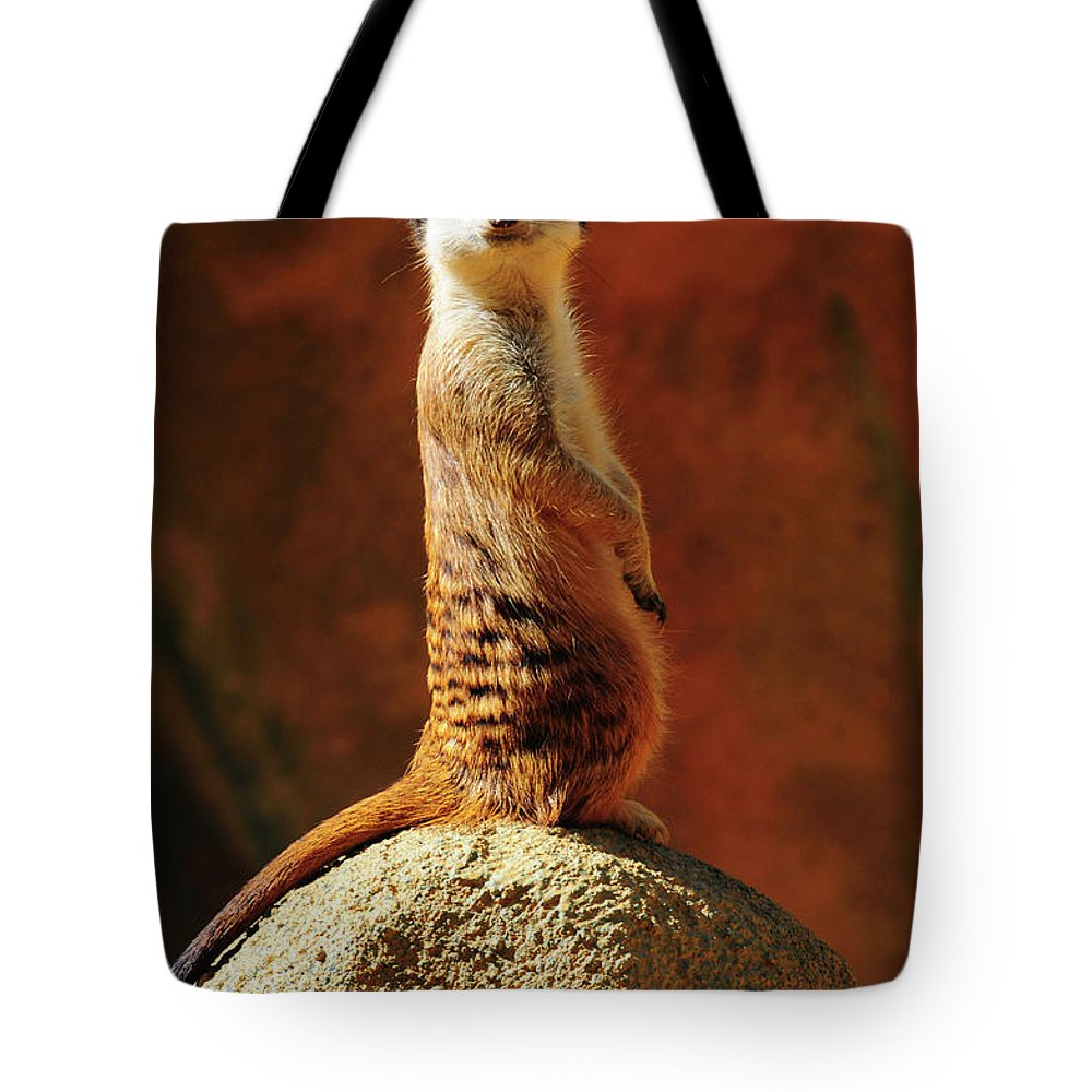 Albany Tote Bag featuring the photograph Meerkat I by Alfie Wace