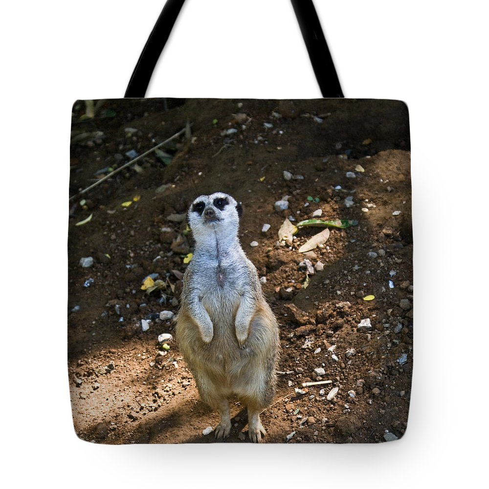 Meerkat Tote Bag featuring the photograph Meerkat Poising by Douglas Barnett