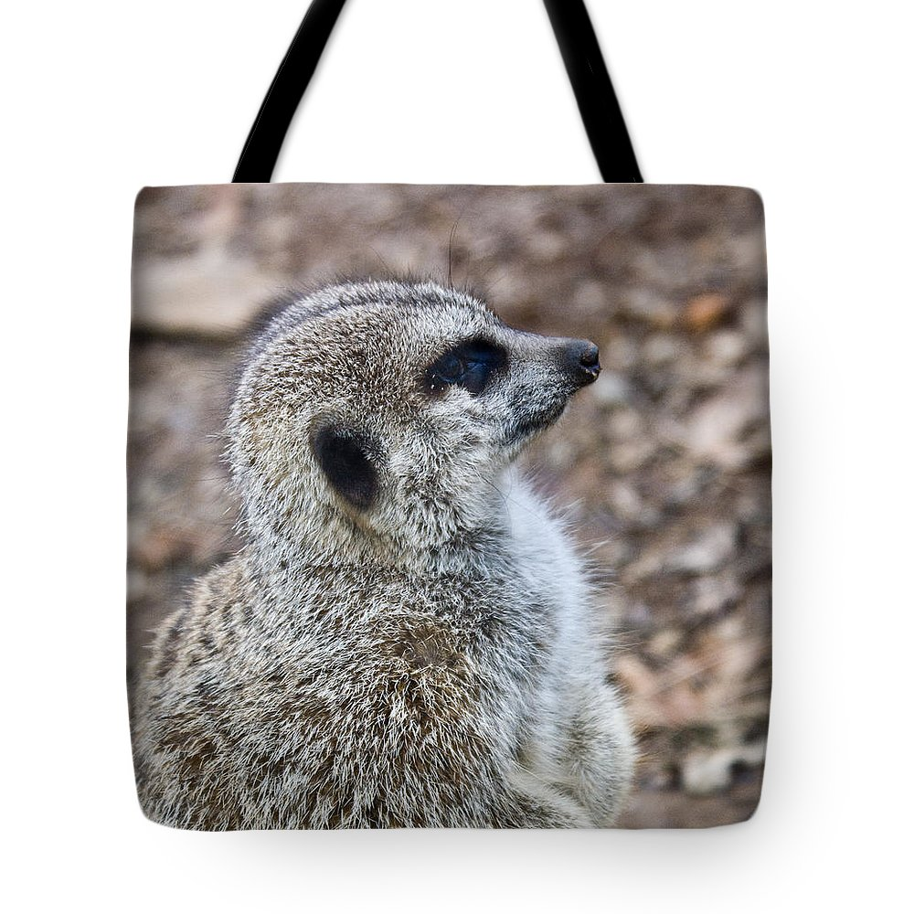 Meerkat Tote Bag featuring the photograph Meerkat Portrait by Douglas Barnett