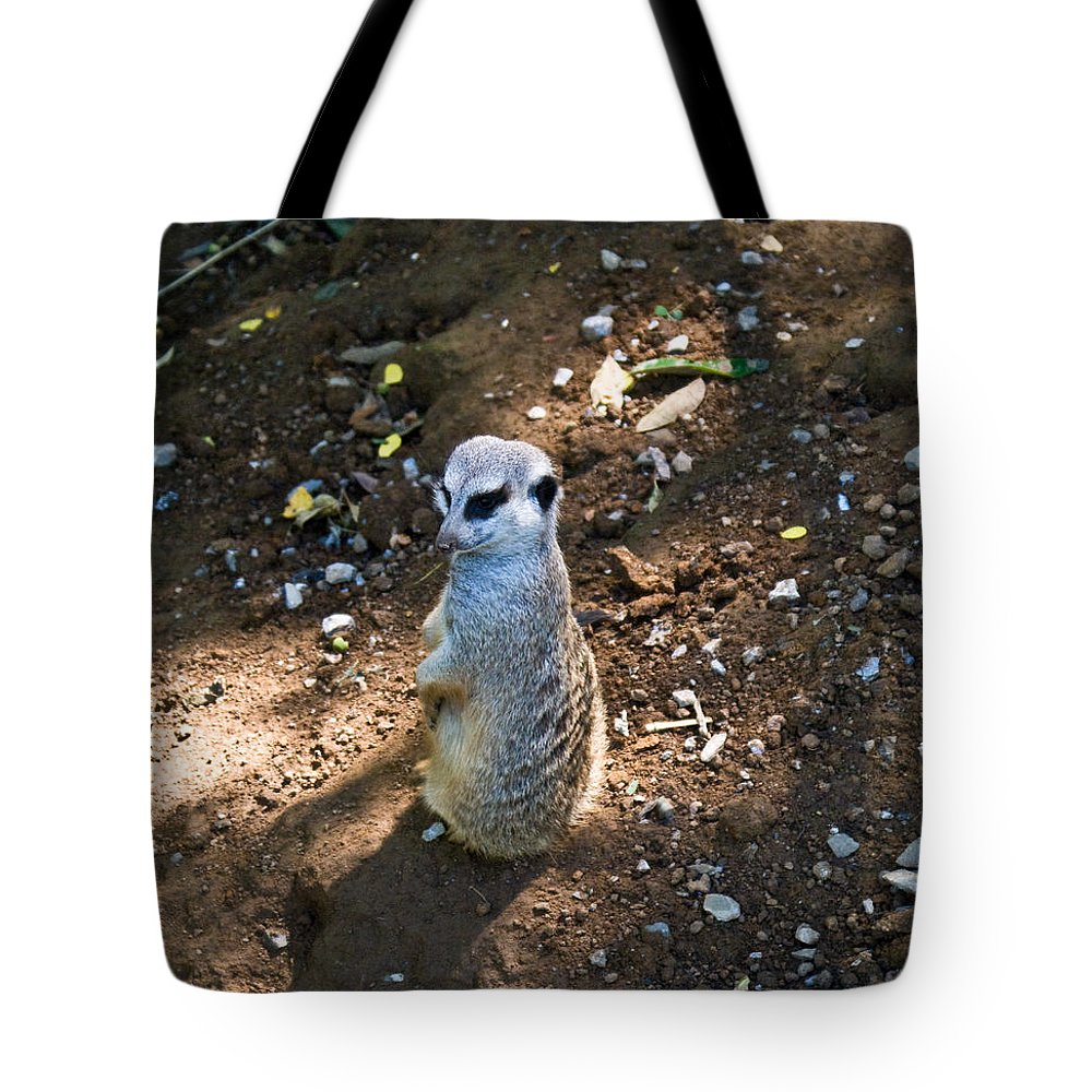 Tote Bag featuring the photograph Meerkat Responding by Douglas Barnett