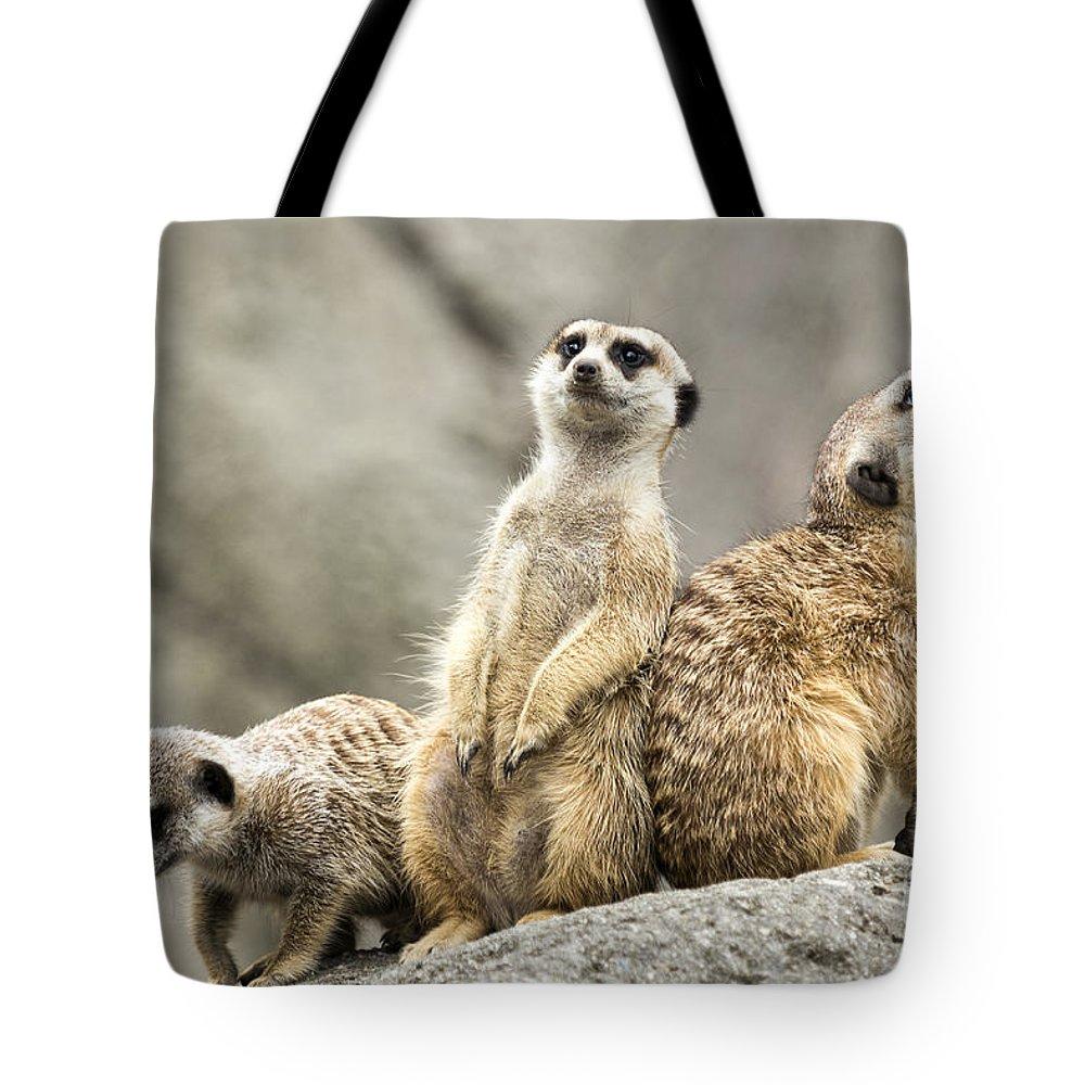 Meerkat Tote Bag featuring the photograph Meerkats by Michael Shake