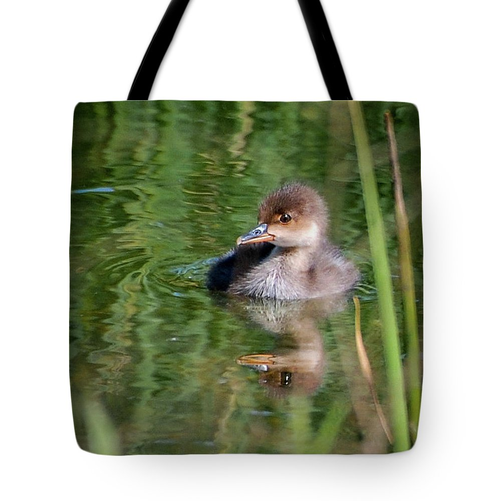 Merganser Tote Bag featuring the photograph Merganser Duckling by Amy Porter