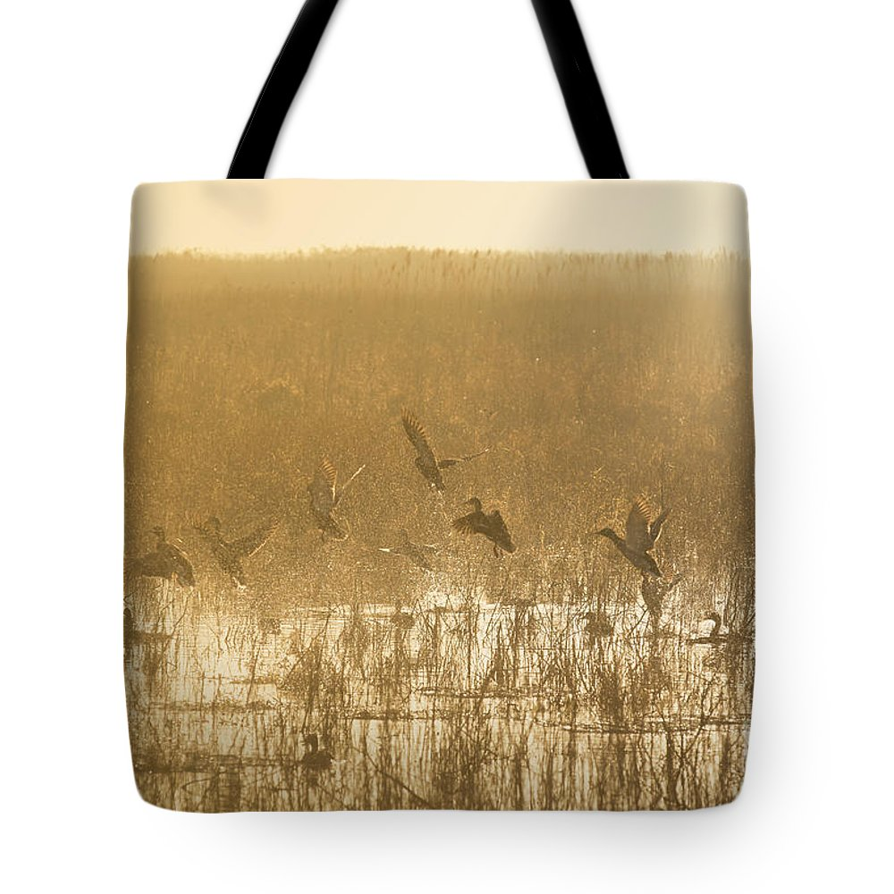 Ducks Tote Bag featuring the photograph Metzgers Marsh In Fog by Charles Owens