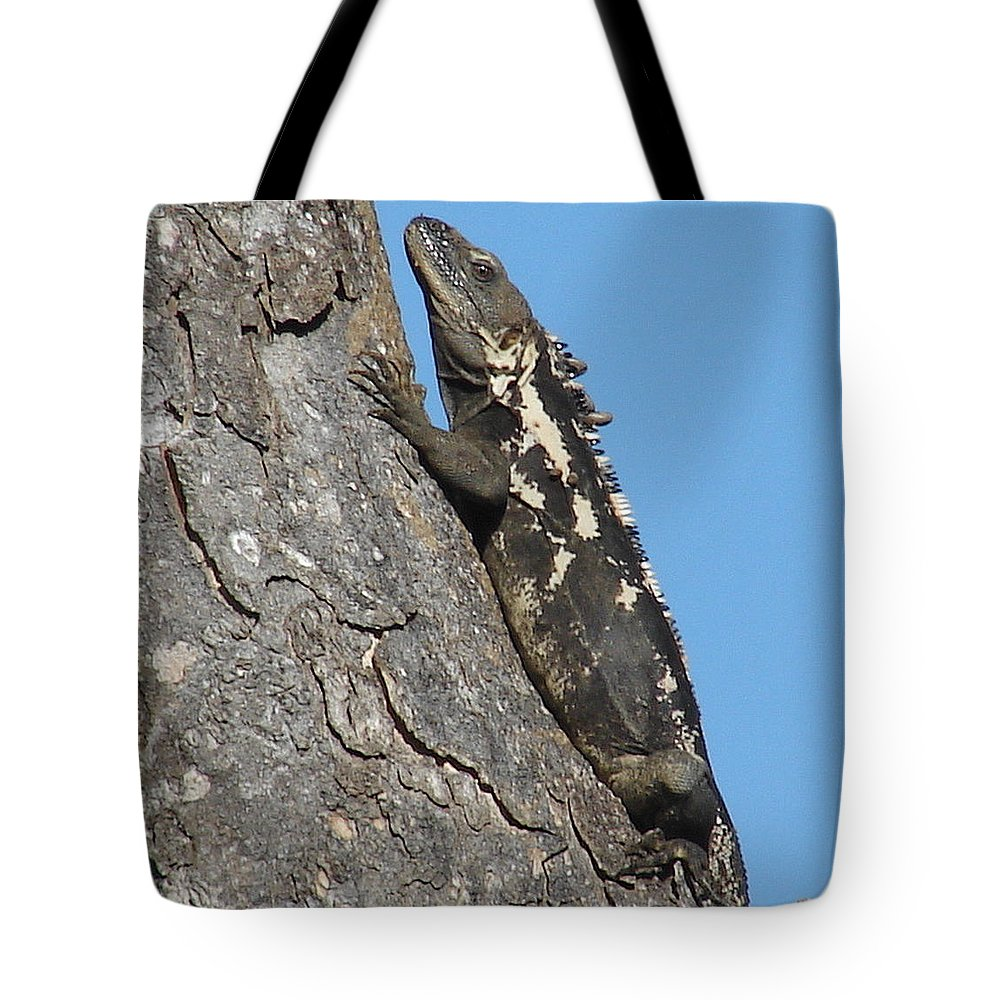 Iguana Tree Brown Blue Sky Tote Bag featuring the photograph Mexican Treasure by Luciana Seymour