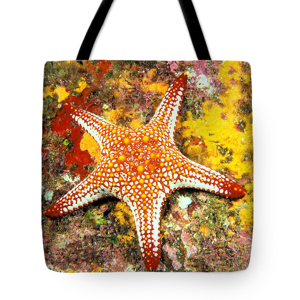 Animal Art Tote Bag featuring the photograph Mexico, Gulf Sea Star by Dave Fleetham - Printscapes