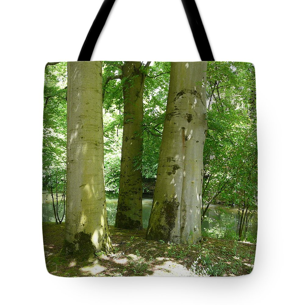 Landscape Tote Bag featuring the photograph Mighty Beech Trees by Valerie Ornstein