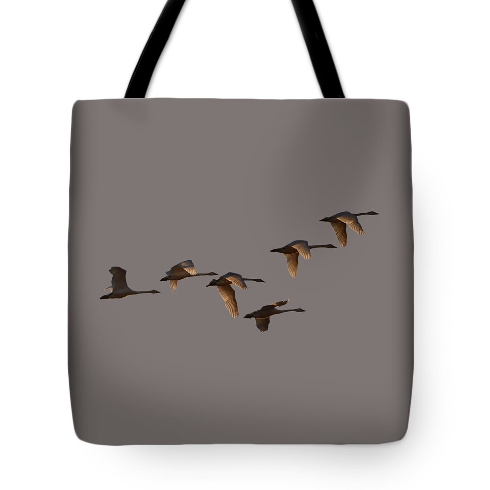 Swans Tote Bag featuring the photograph Migrating Swans by Whispering Peaks Photography