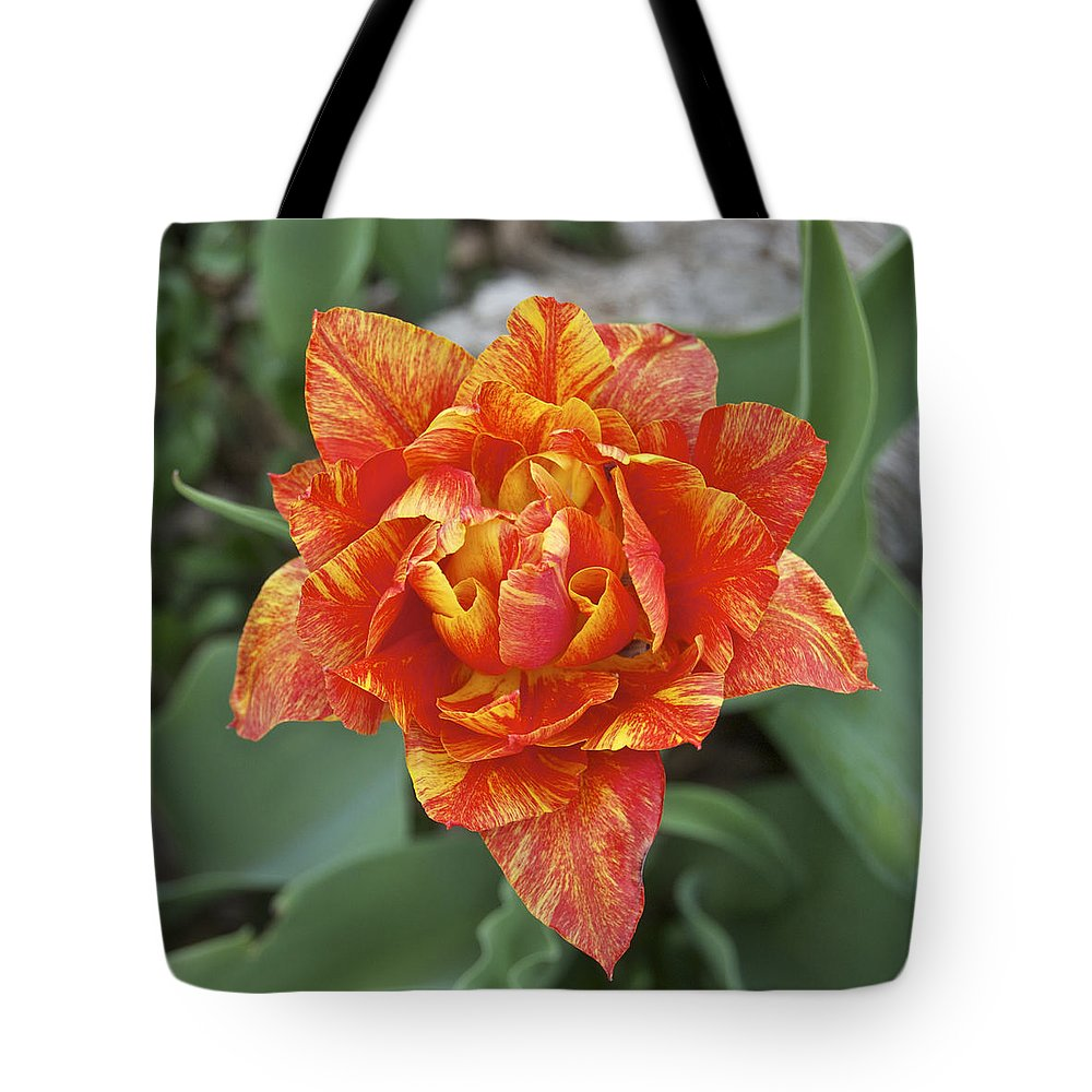 Tulip.hybrid Tote Bag featuring the photograph Mike's Hybrid Tulip by Michael Peychich