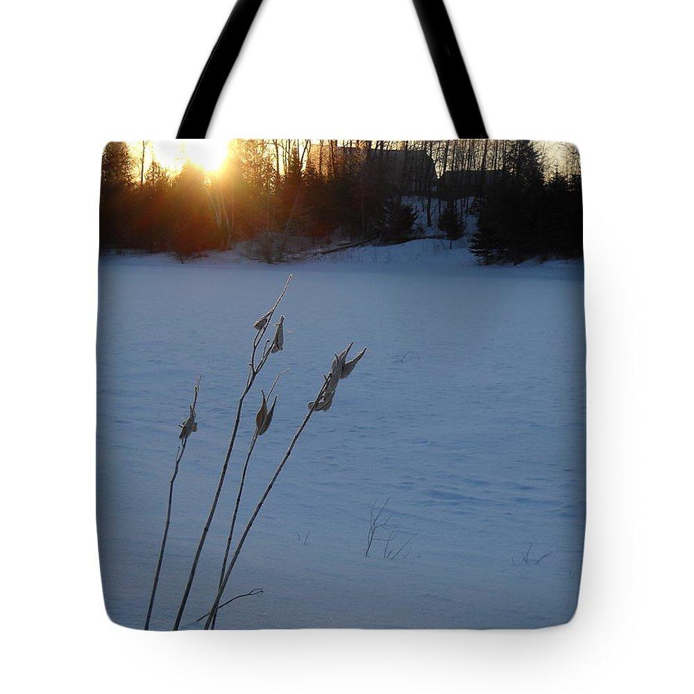 Milkweed Tote Bag featuring the photograph Milkweed Stems Winter Sunrise by Kent Lorentzen