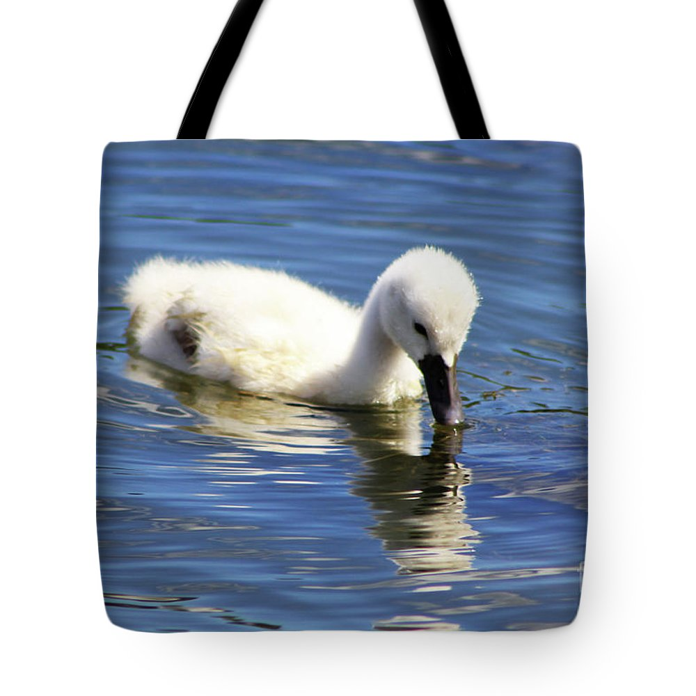 Mirrored Cygnet Tote Bag featuring the photograph Mirrored Cygnet by Alyce Taylor