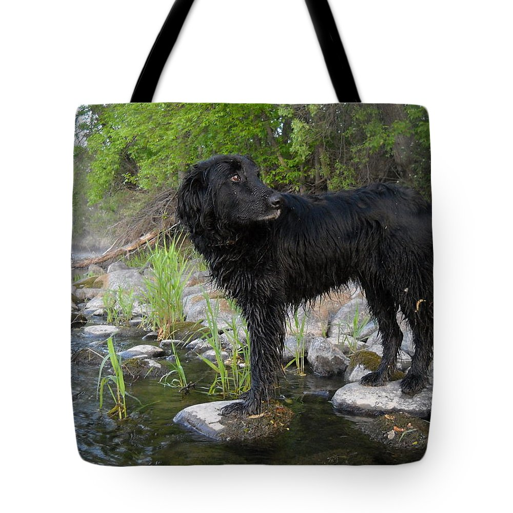 Mississippi River Tote Bag featuring the photograph Mississippi River Posing Dog by Kent Lorentzen