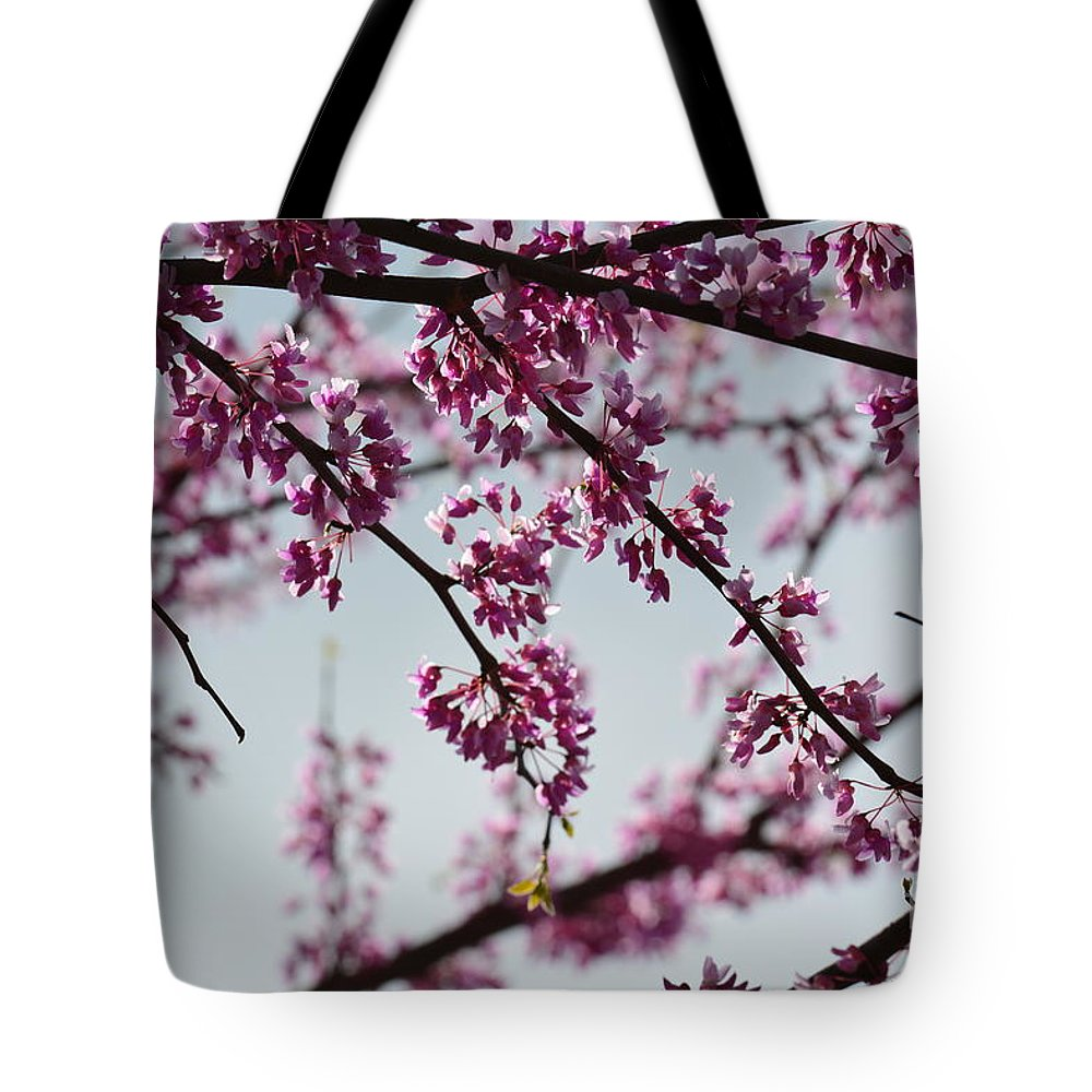 Misty Spring Morning Tote Bag featuring the photograph Misty Spring Morning by Maria Urso