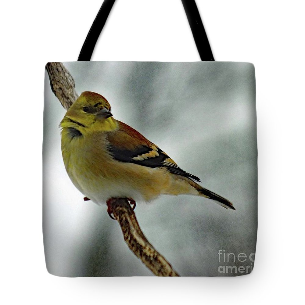 American Goldfinch Tote Bag featuring the photograph Molting In January? - American Goldfinch by Cindy Treger