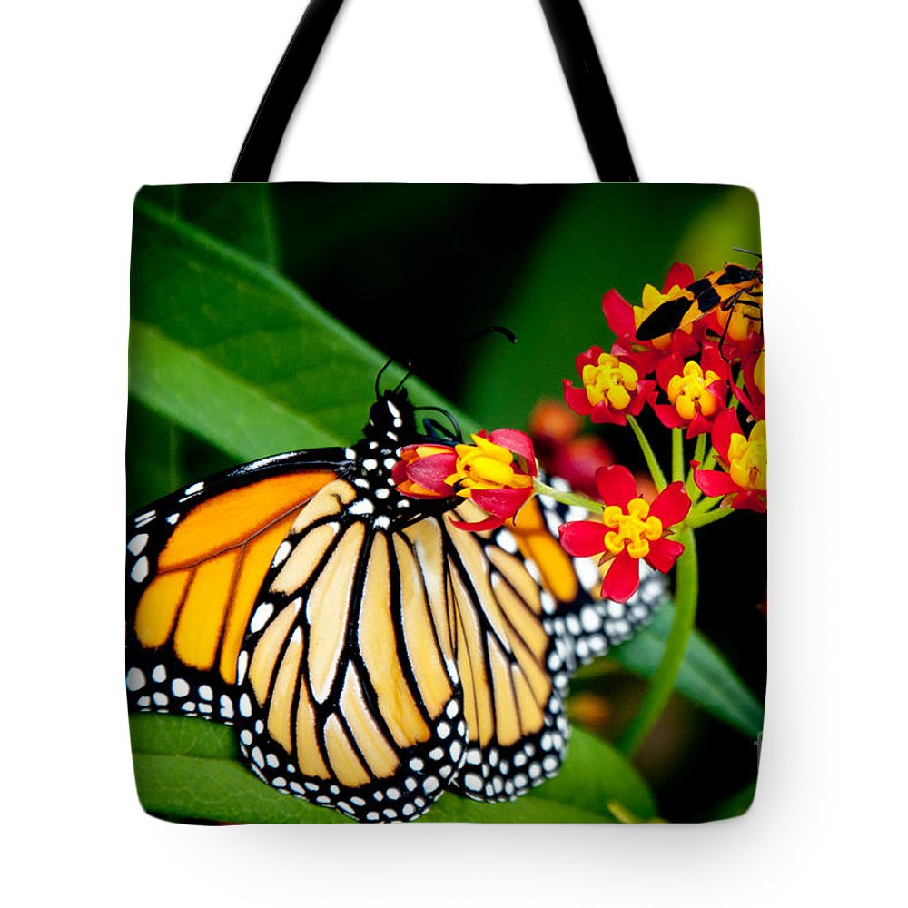 Monarch Butterfly Tote Bag featuring the photograph Monarch Butterfly At Lunch With 2 Box Elder Bugs by Andee Design