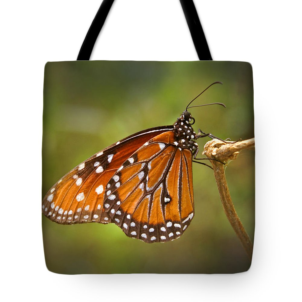Monarch Tote Bag featuring the photograph Monarch Butterfly by Heather Coen