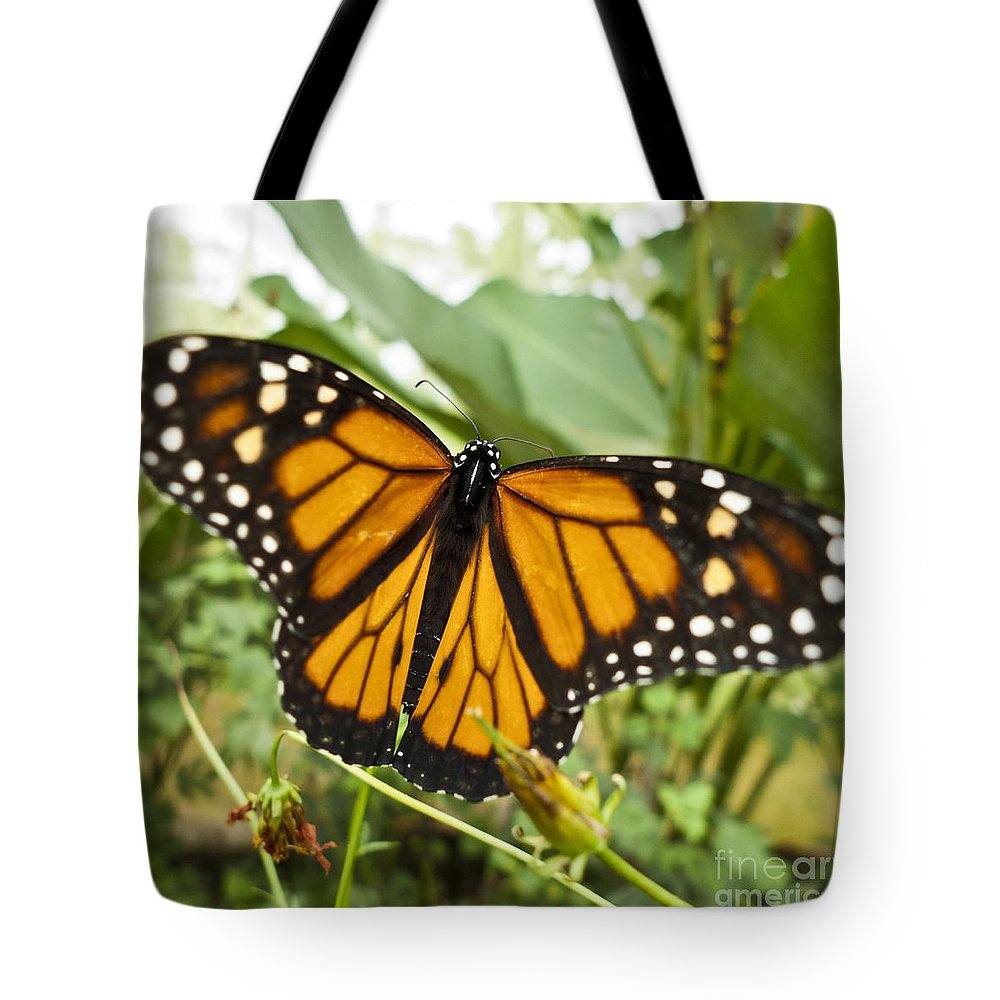 Nature Tote Bag featuring the photograph Monarch Butterfly II by Heiko Koehrer-Wagner