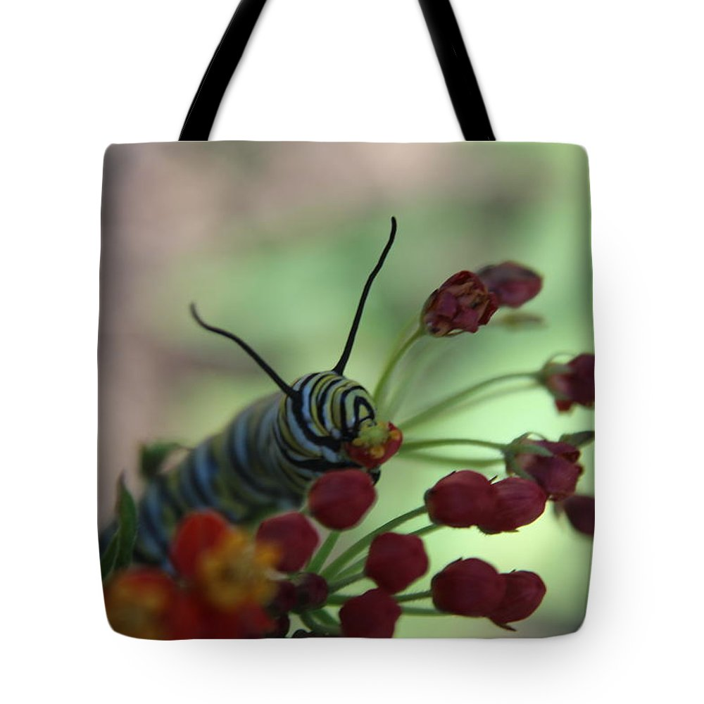 Insects Tote Bag featuring the photograph Monarch Caterpillar by Cheryl Kostanesky