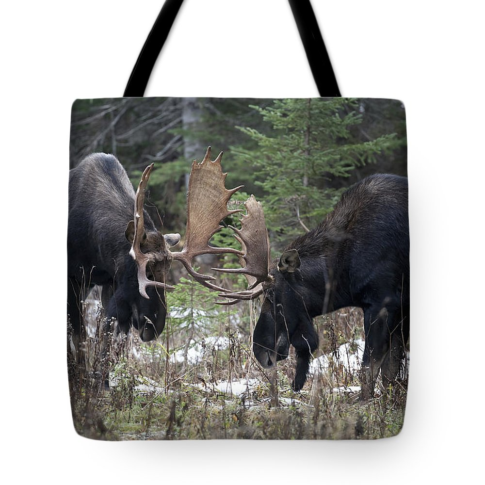 Adversary Tote Bag featuring the photograph Moose. Males Fighting During The Rut by Philippe Henry