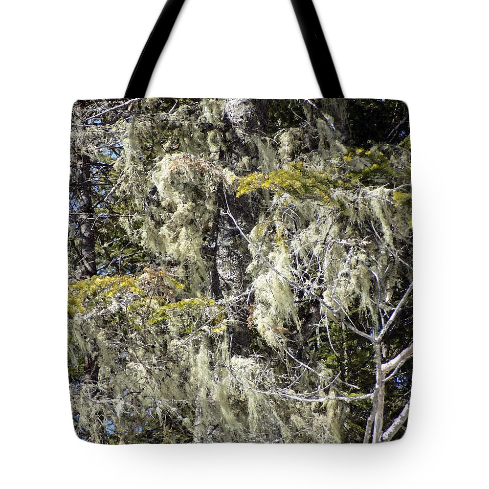 Hoar Tote Bag featuring the photograph More Hoar On The Cedar by William Tasker