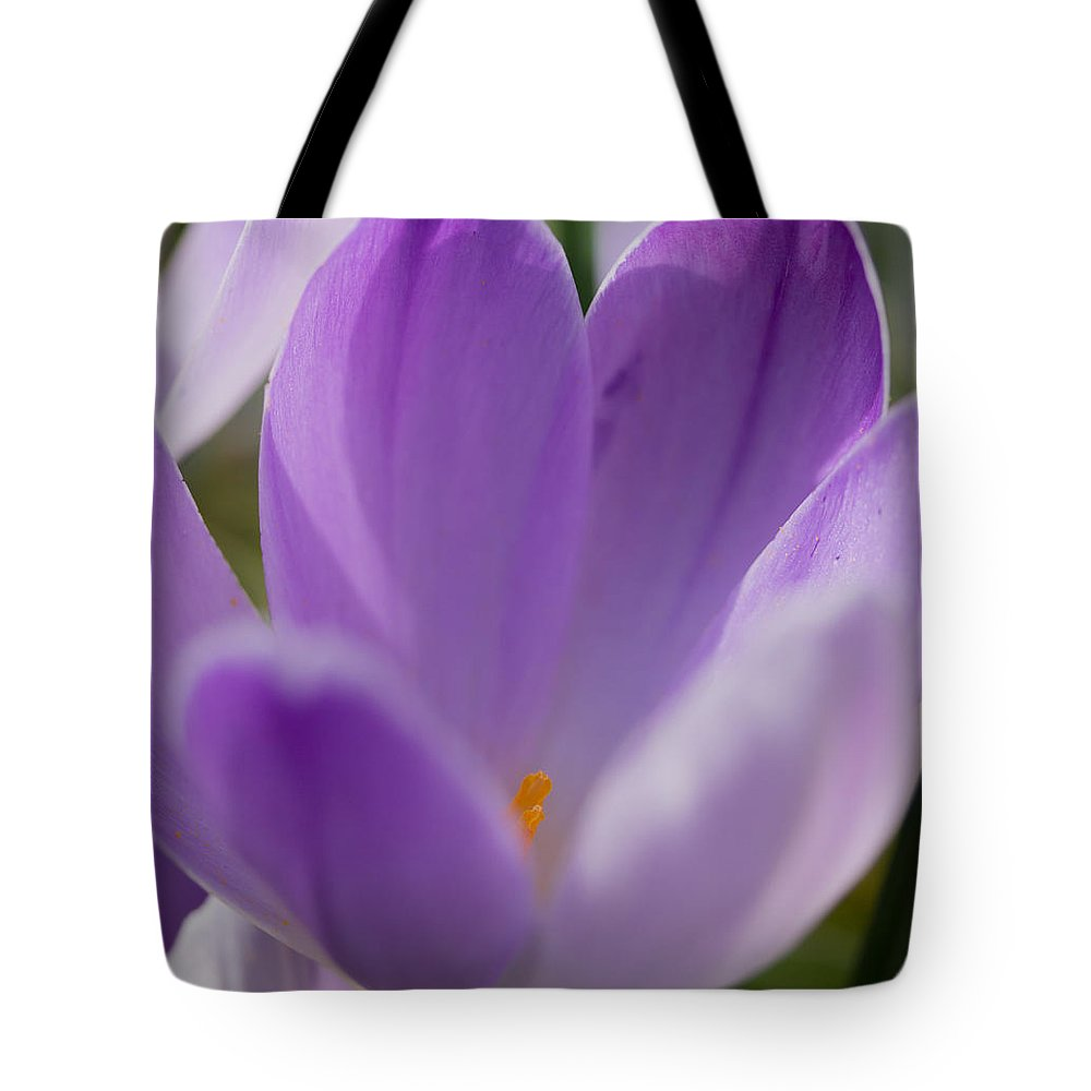 Crocus Tote Bag featuring the photograph Morning Crocus One by Mo Barton