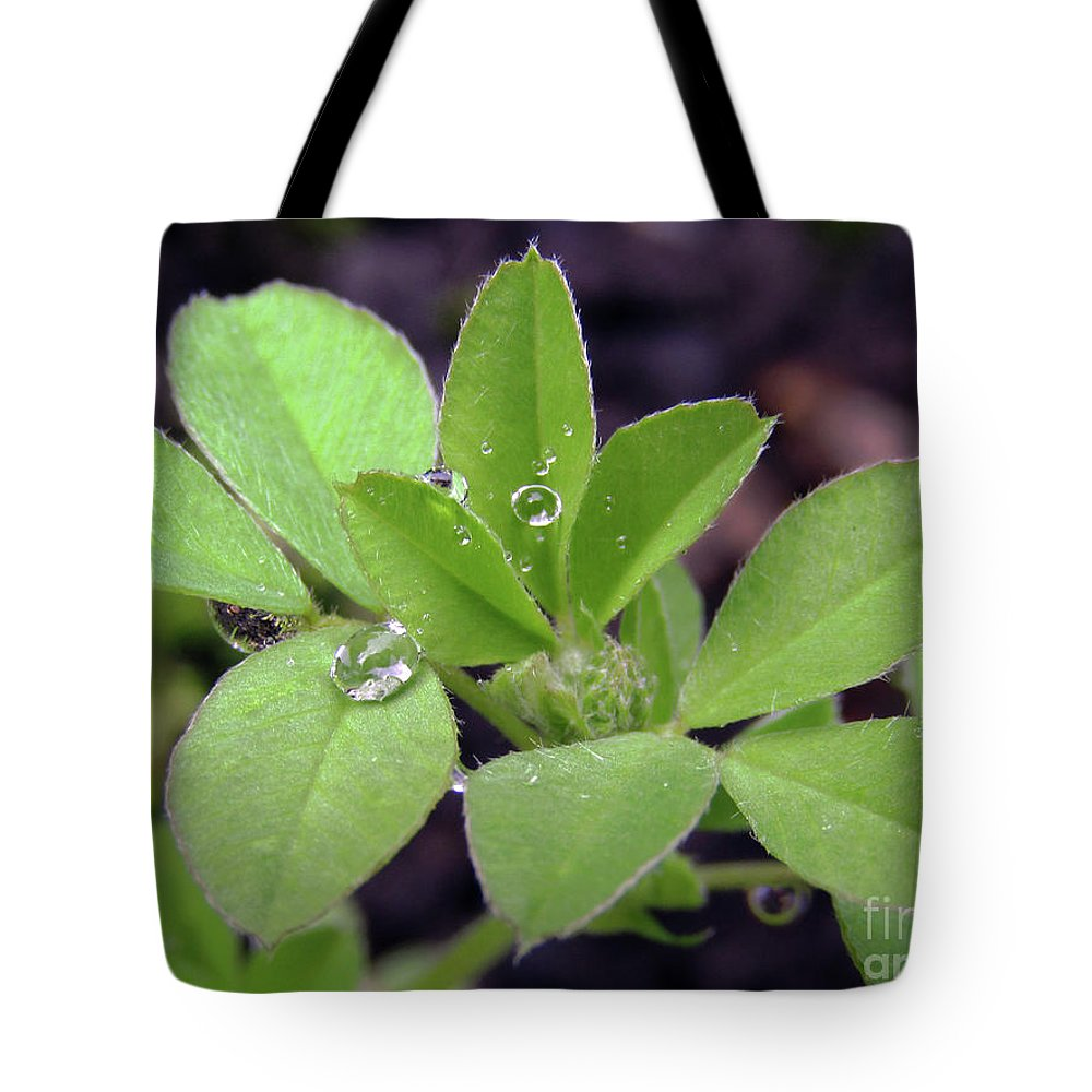 Rain Tote Bag featuring the photograph Dewdrops On Leaves by Kim Tran