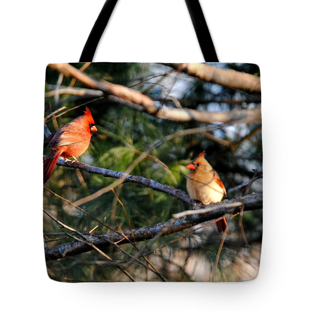 Cardinal Tote Bag featuring the photograph Morning Discussion by Jai Johnson