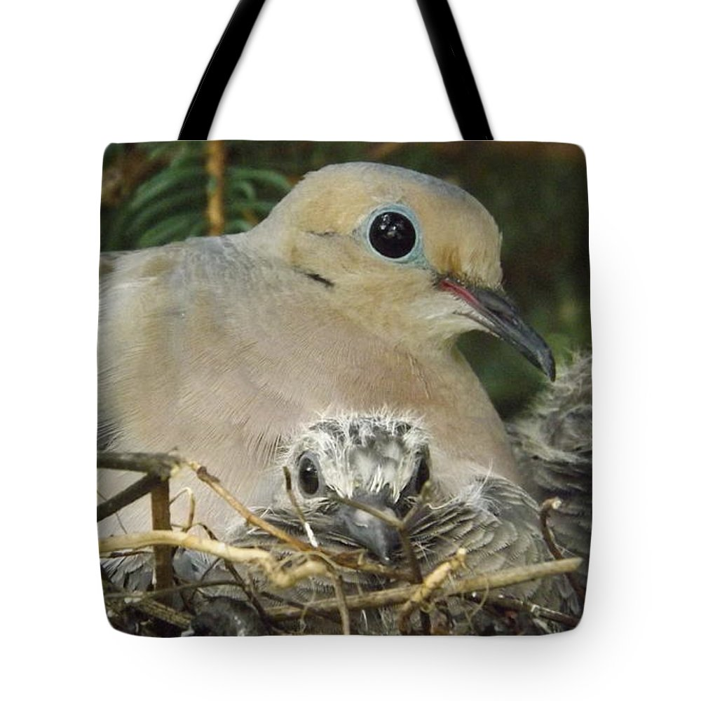 Birds Tote Bag featuring the photograph Morning Dove And Two Babys by Dennis Pintoski