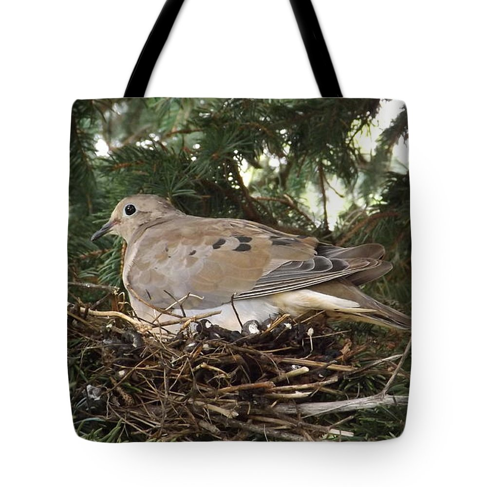 Birds Tote Bag featuring the photograph Morning Dove On Her Nest 2 by Dennis Pintoski