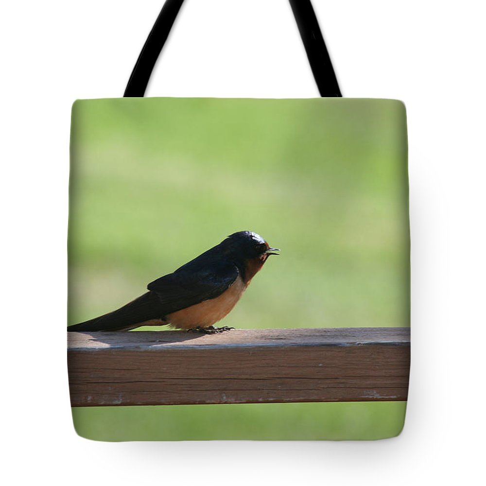 Barn Swallow Nesting Bird Singing Nature Wild Tote Bag featuring the photograph Morning Song by Andrea Lawrence