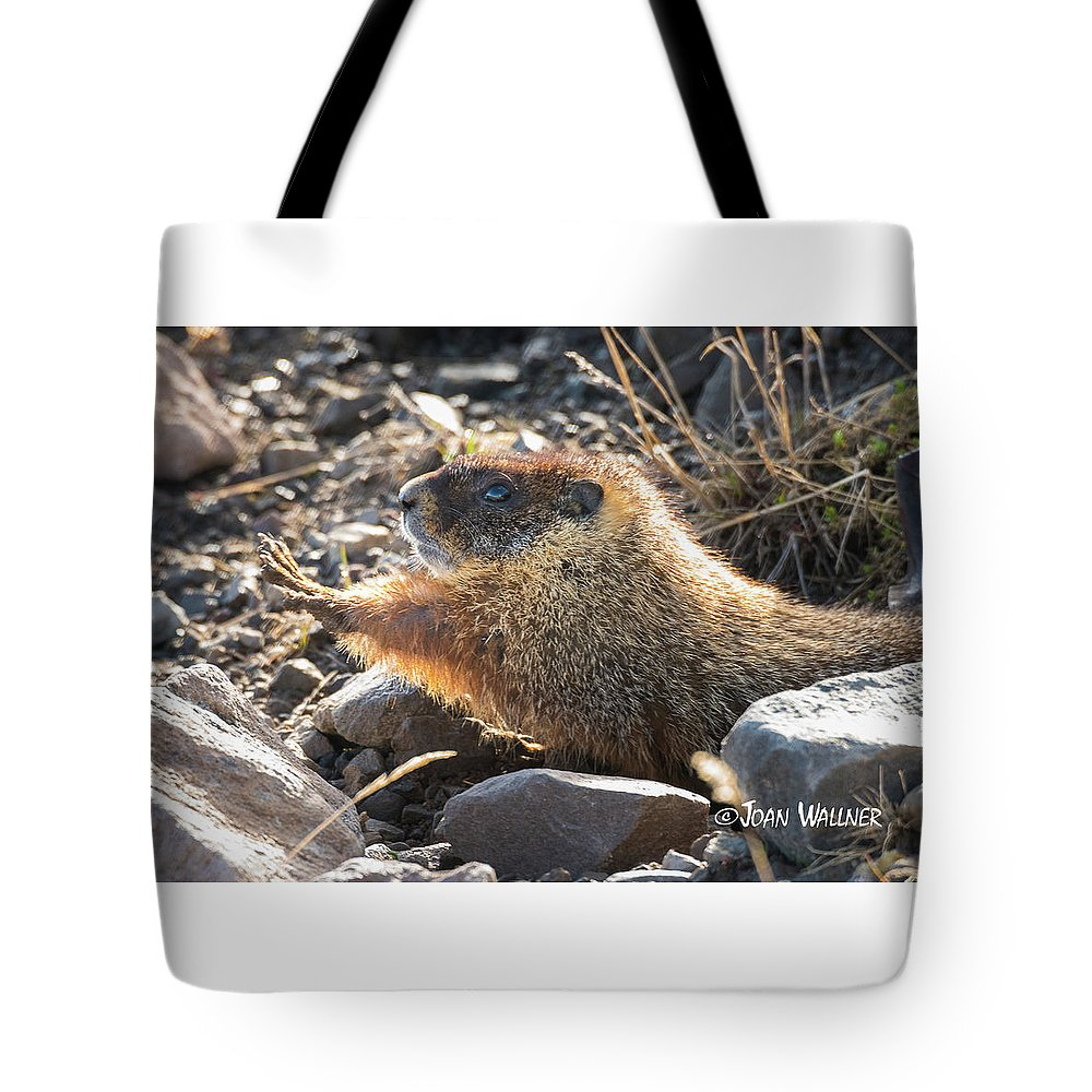 Mount Washburn Tote Bag featuring the photograph Morning Stretch by Joan Wallner