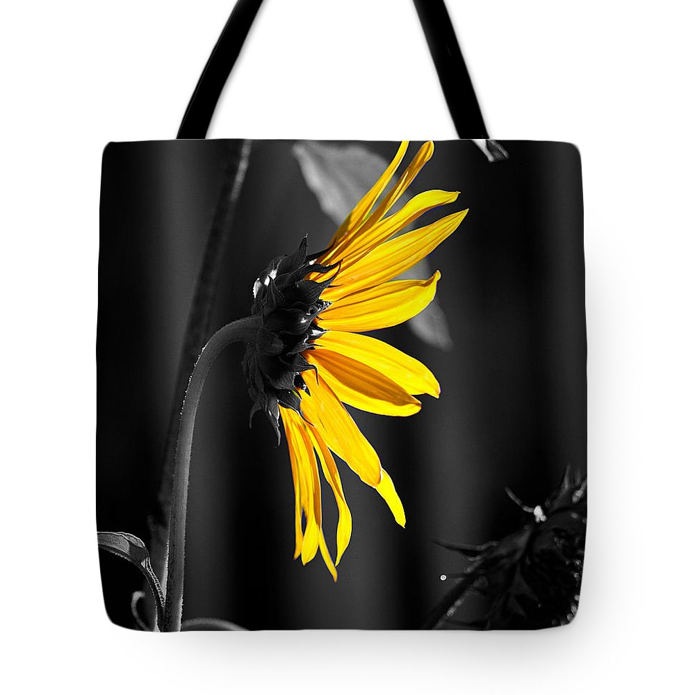 Clay Tote Bag featuring the photograph Morning Sun by Clayton Bruster