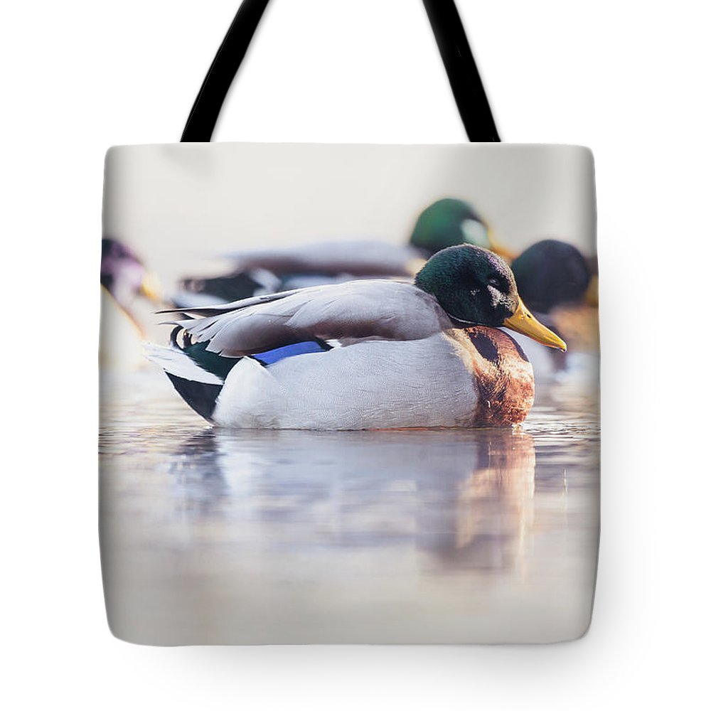 Duck Tote Bag featuring the photograph Morning Swim by Annette Bush