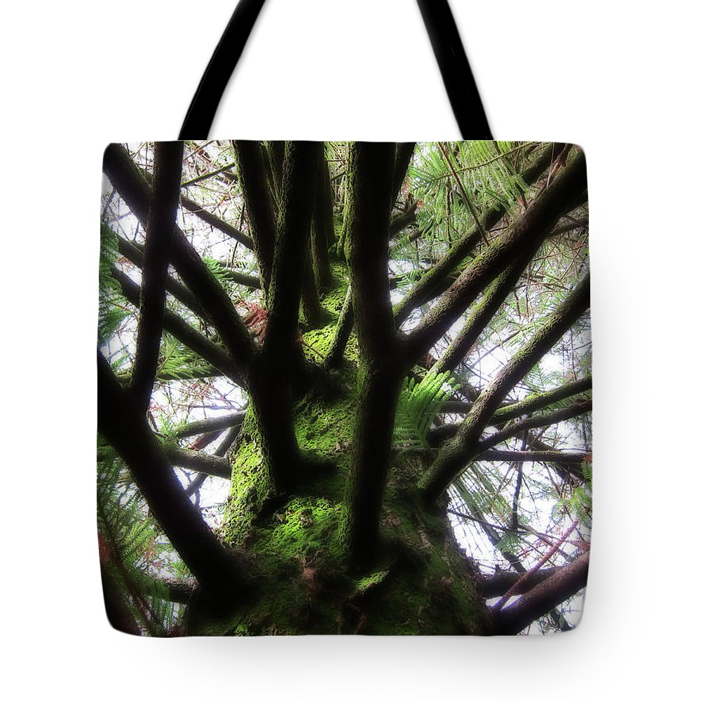 Pine Tote Bag featuring the photograph Moss Tree by Douglas Barnard