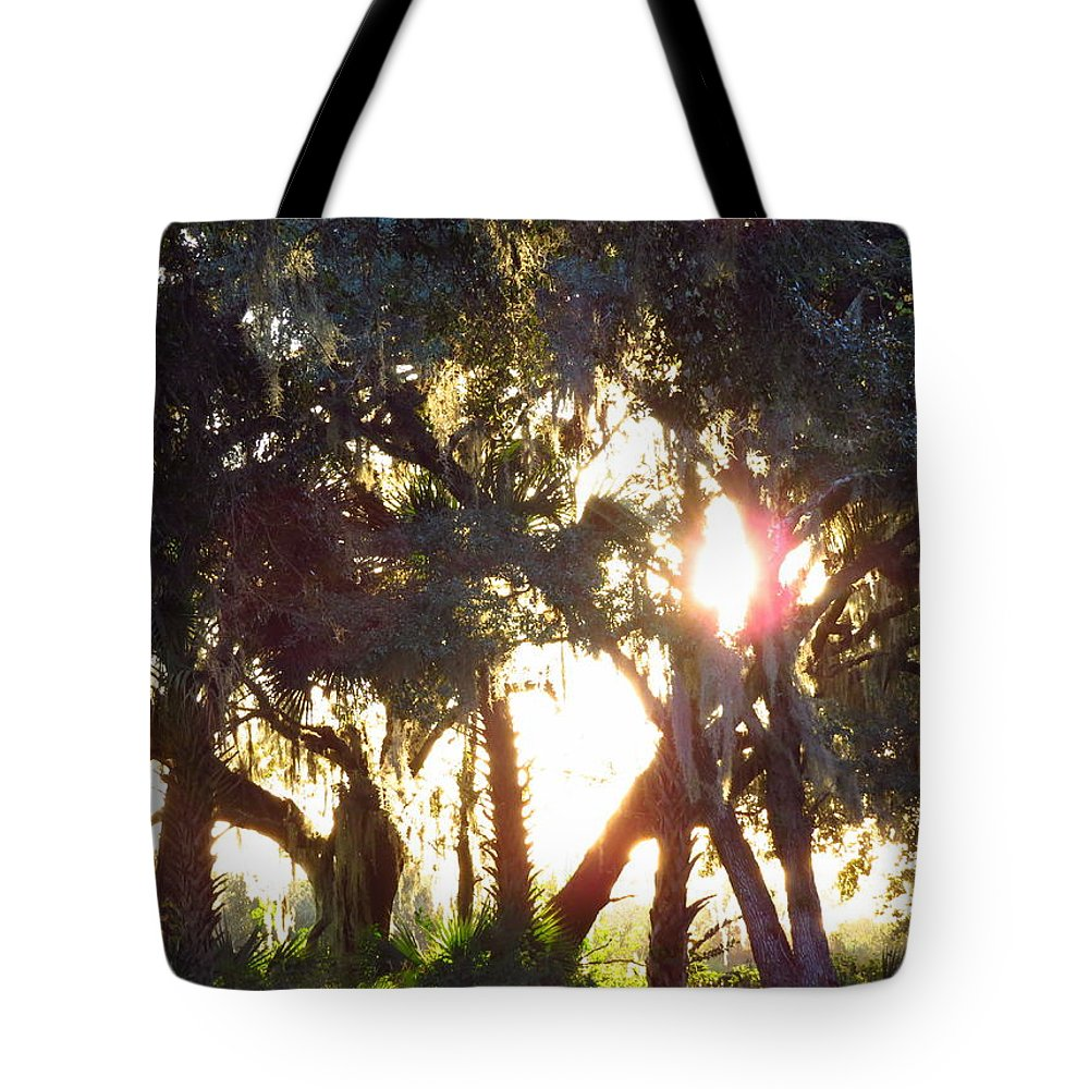 Woods Tote Bag featuring the photograph Mossy Glow by WanderBird Photographi