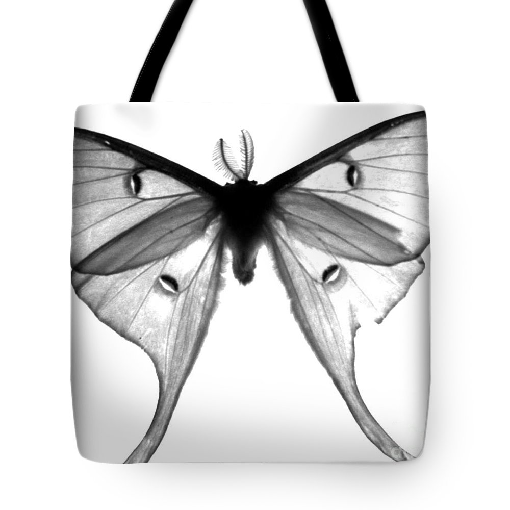 Moth Tote Bag featuring the photograph Moth by Amanda Barcon