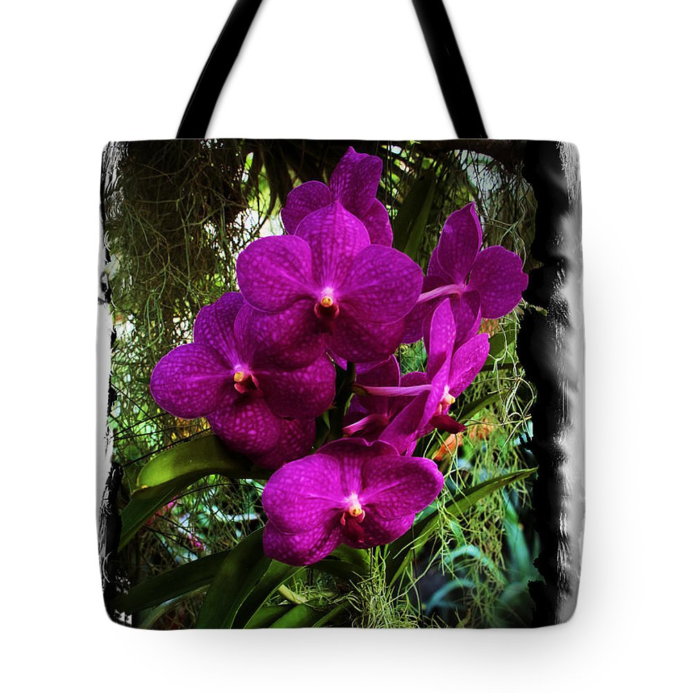 Orchid Moth Tote Bag featuring the photograph Moth Orchids by Karry Degruise