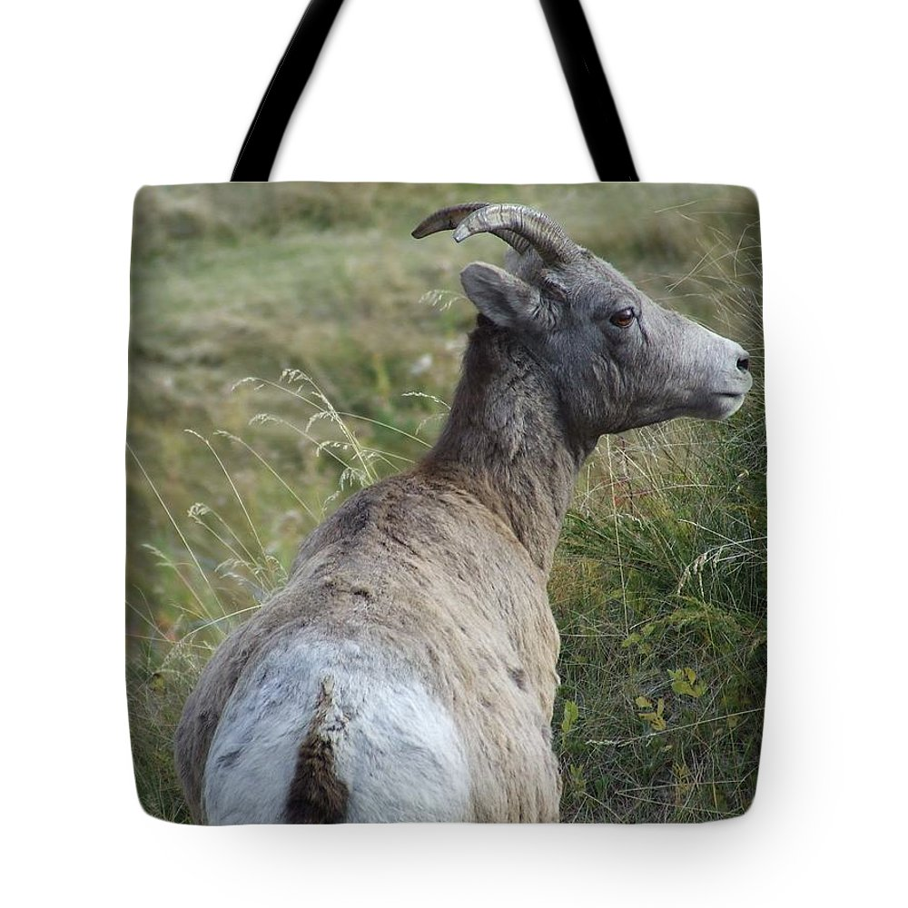 Bighorn Sheep Tote Bag featuring the photograph Mother Bighorn by Tiffany Vest
